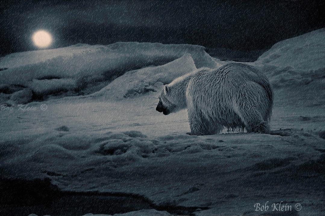 A Wintery Night Walk